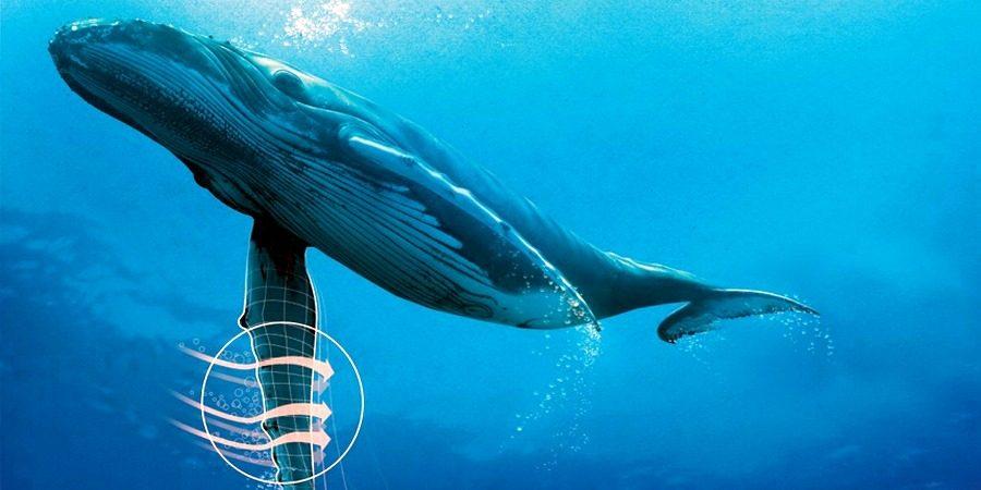 Плавники горбатого кита