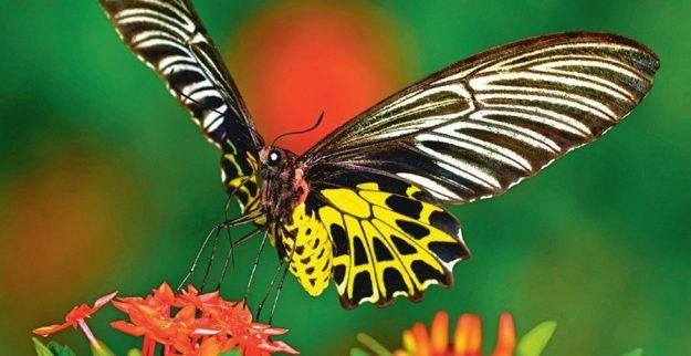 Светопоглощающие крылья бабочки