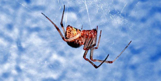 «Умный» клей домашнего паука