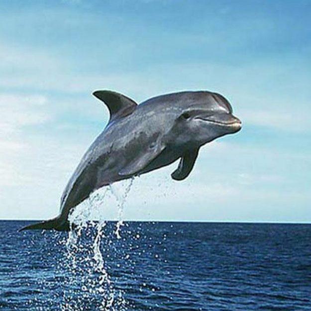 Ворвань морских млекопитающих