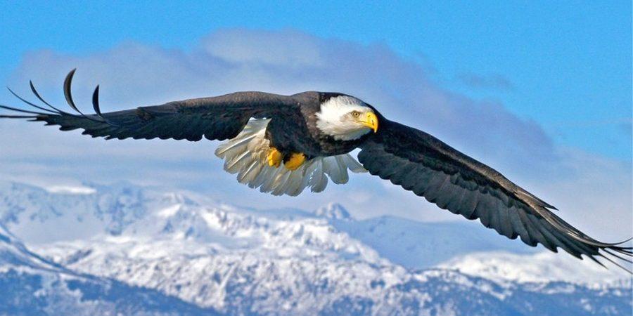 Загибающийся кверху кончик крыла парящих птиц